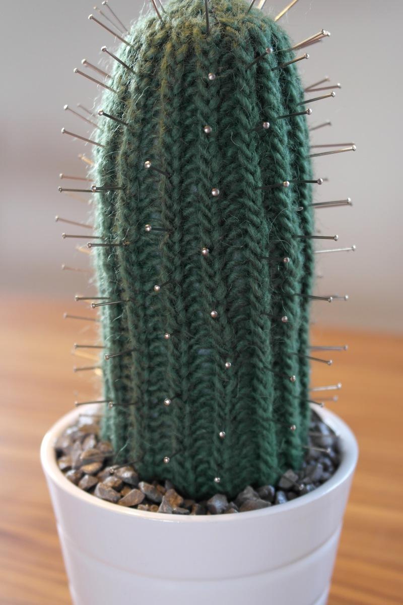 Verdens nemmeste kaktus...